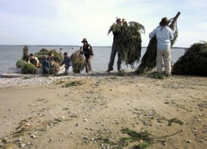 Stopping erosion in Chesapeake Bay